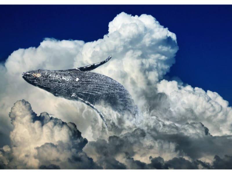 空を跳ぶクジラ