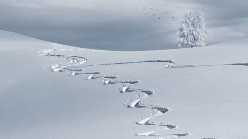 雪の上についた跡