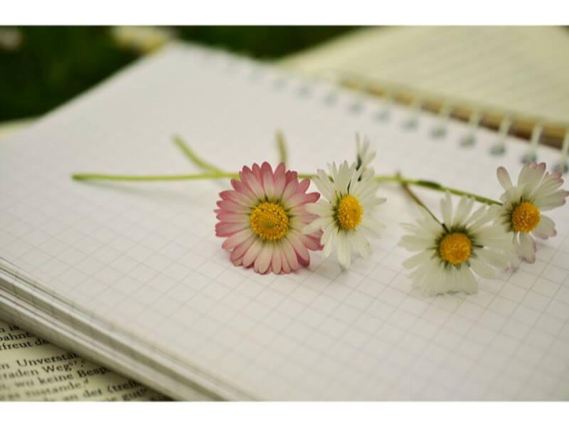 花と方眼ノート